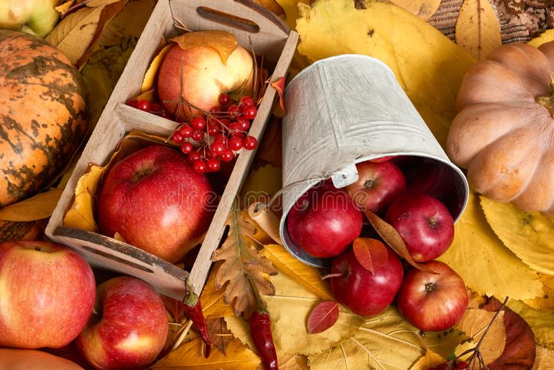 Autumn background from yellow leaves, apples, pumpkin. Fall season, eco food and harvest concept royalty free stock photos