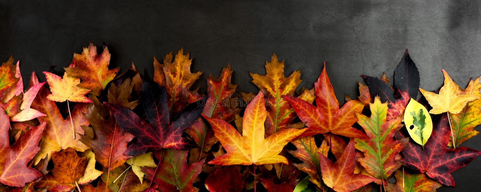 AUTUMN BACKGROUNDS, FRAME OR BORDER OF COLORFUL FALL LEAVES. HIGH ANGLE VIEW AGAINST DARK BACKGROUND. stock photo