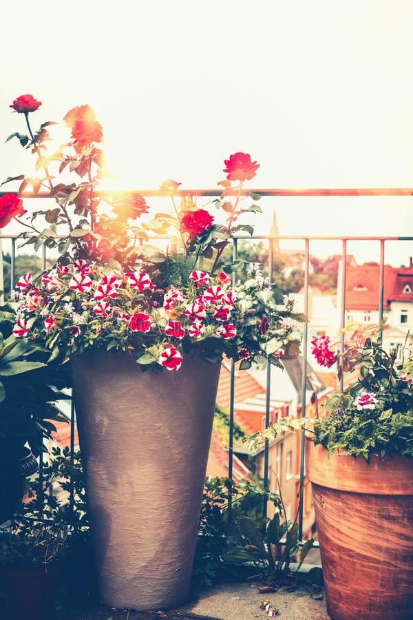 Autumn balcony garden. Various flowers pots on sunny terrace. Urban gardening royalty free stock images