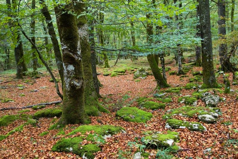 autumn baska kraju obrazy royalty free