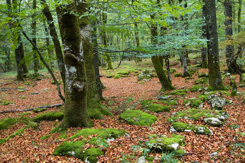 Autumn at Basque Country royalty free stock images
