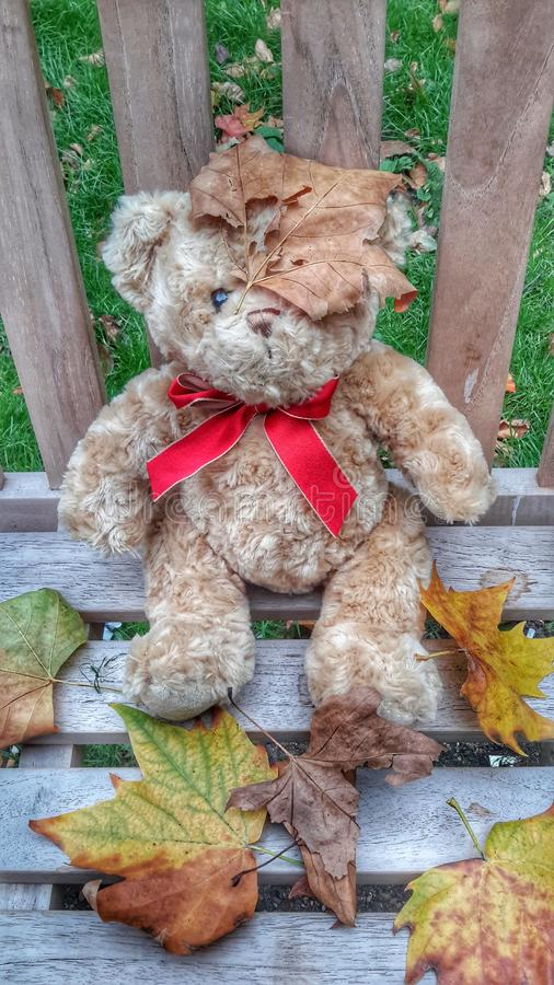 Autumn Bear stock photos