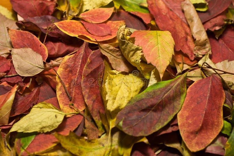 Autumn Beautiful Colored Leaves Stockfoto