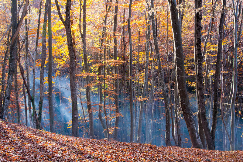 Download Autumn In Beech Forest Stock Image - Image: 26314641