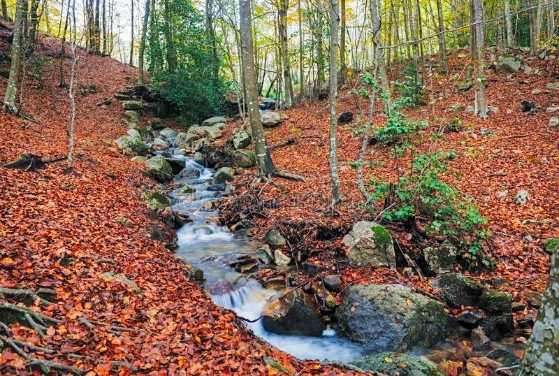 Autumn Beech Forest wirh Creek Across in the Montseny Natural Park. Catalonia stock image