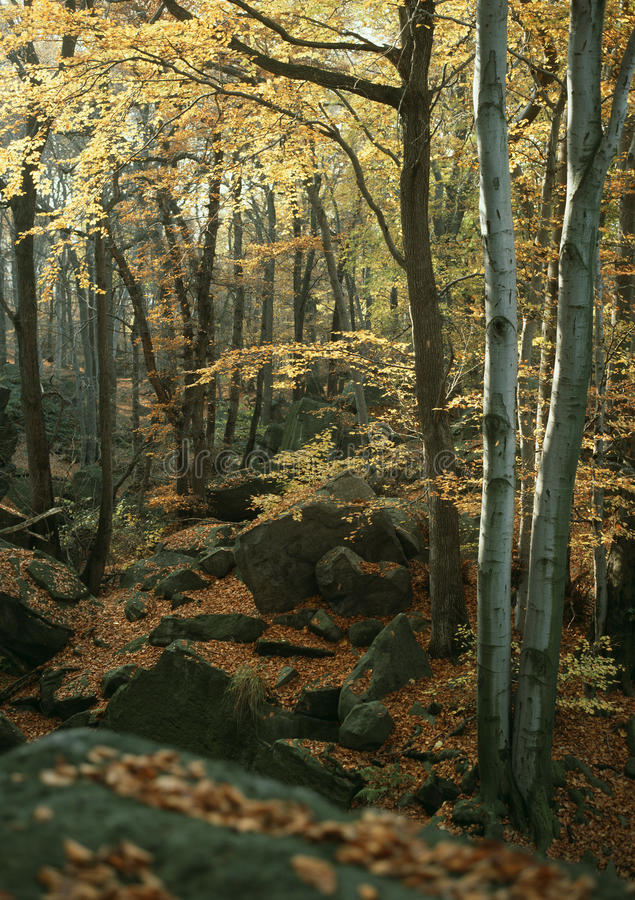 Download Autumn beech and stone stock image. Image of mood, exteriors - 19993209