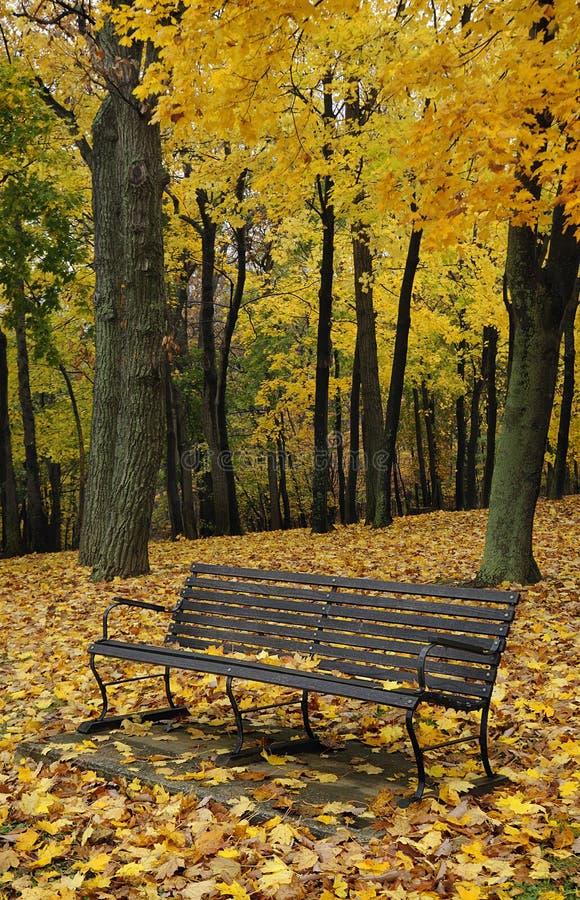 Free Autumn Bench Royalty Free Stock Image - 11780716