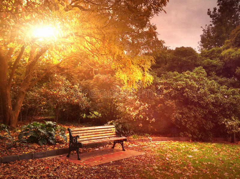 Autumn bench in park. Park bench in Autumn with fallen leaves royalty free stock photo