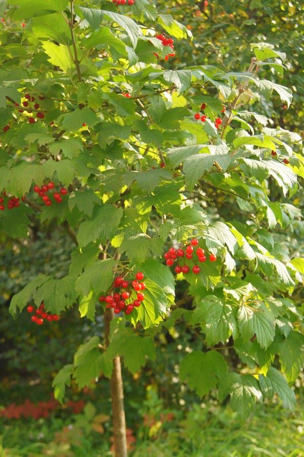 Autumn Berries imágenes de archivo libres de regalías