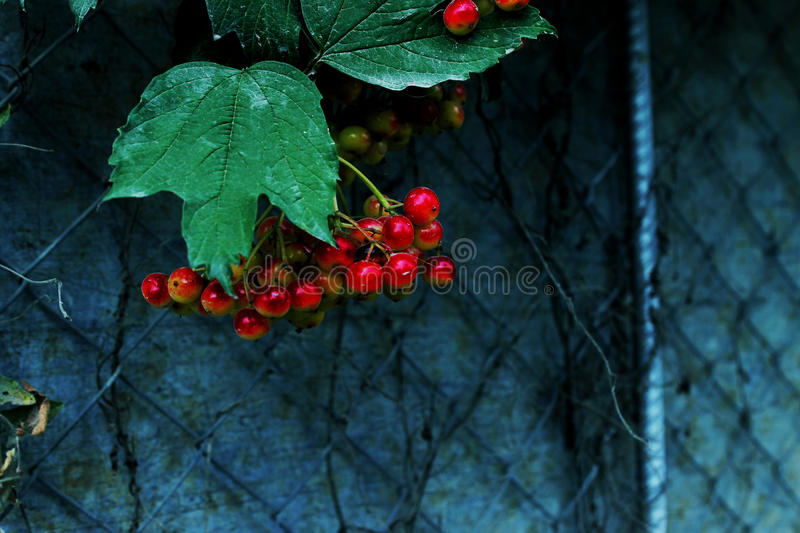 Autumn Berries stock foto's