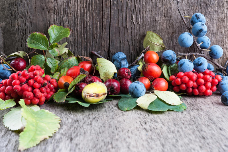 Autumn Berries Royalty Free Stock Photo