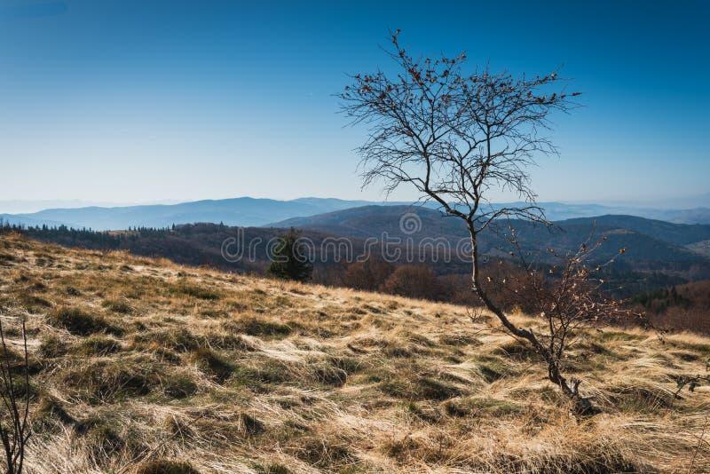Autumn Beskid Wyspowy från Mountain Clearing nära toppmötet i Mogielica royaltyfri bild