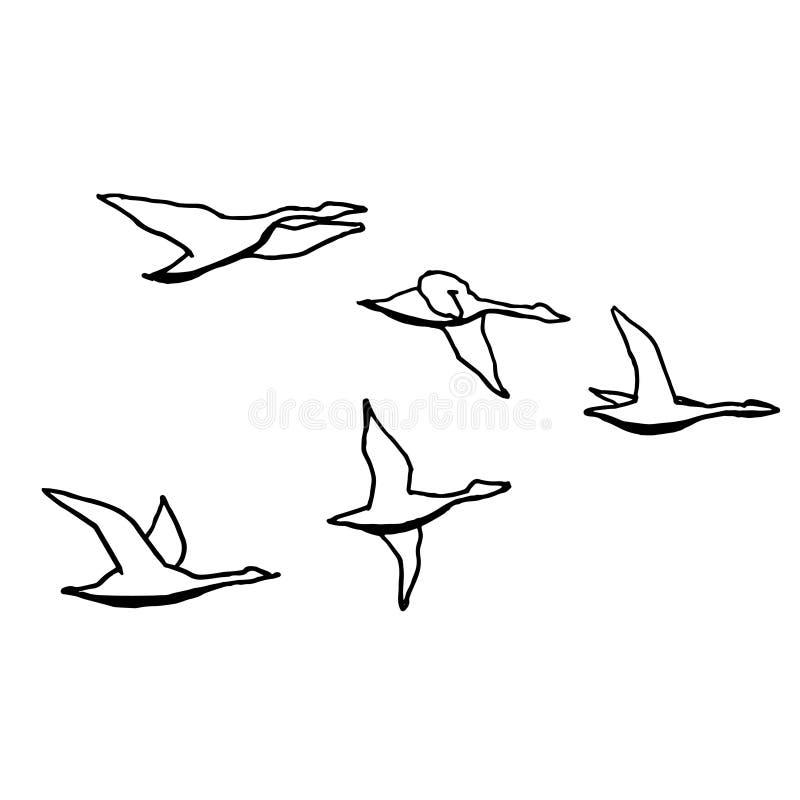 Autumn bird flock. Monochrome sketch, hand drawing. Black outline on white background. Vector illustration royalty free illustration