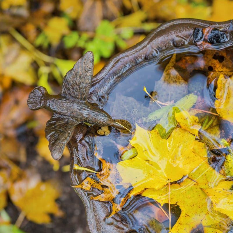 Autumn Birdbath fotos de archivo libres de regalías