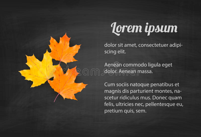 Autumn blackboard background with realistic maple leaves vector illustration