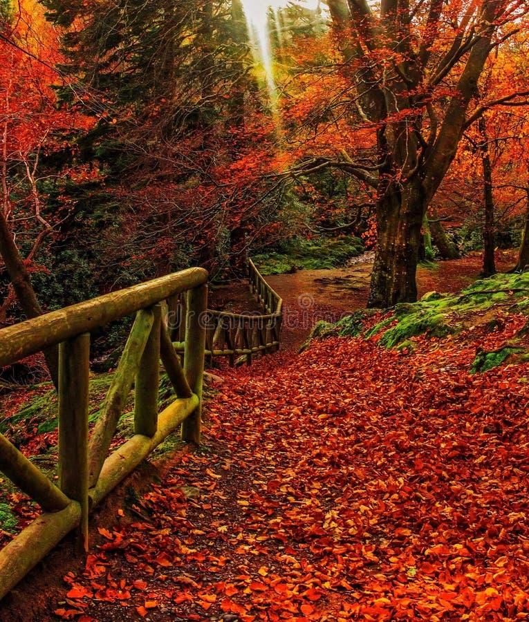 Autumn Blaze stock foto's