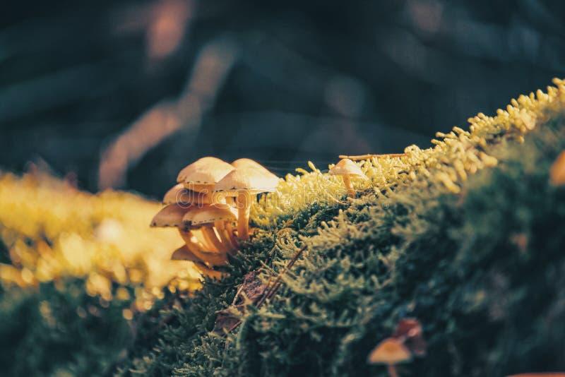 Autumn, Blur, Bokeh royalty free stock photography