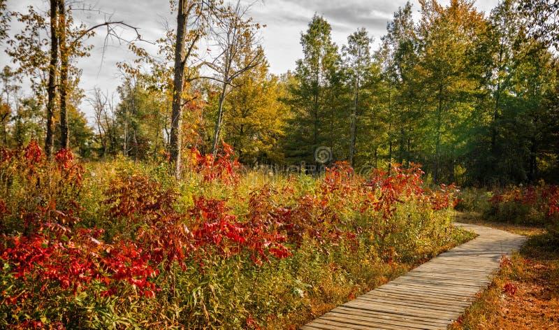 Autumn Boardwalk stockbild