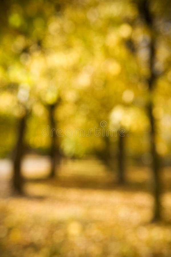 Autumn bokeh royalty free stock photography