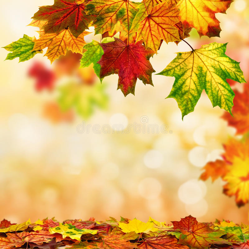 Autumn bokeh background bordered with leaves stock photography