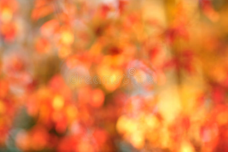 Autumn bokeh background stock image