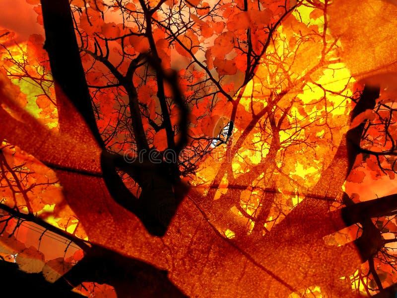 Autumn Bonfire Abstract stock photos