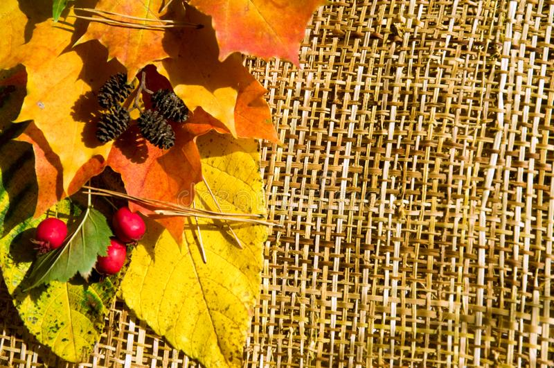 Autumn border horizontal stock photography