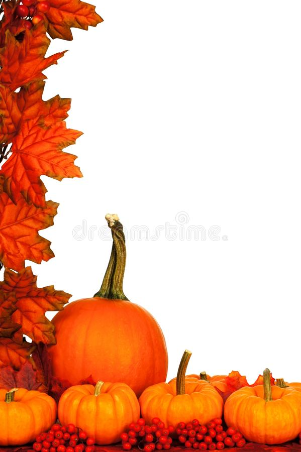 Autumn border. Vertical autumn corner border with pumpkins and red leaves over white stock photos