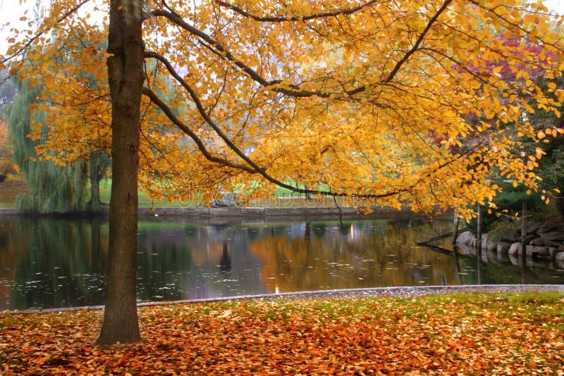 Autumn in Boston royalty free stock photography
