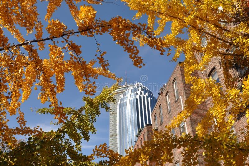 Autumn in Boston, sunny day stock photography