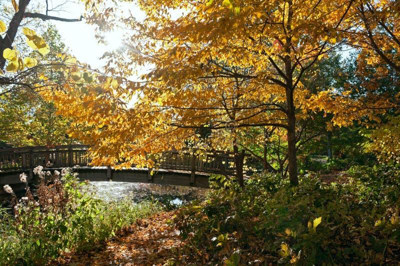 Autumn at Botanical Gardens in Madison royalty free stock image