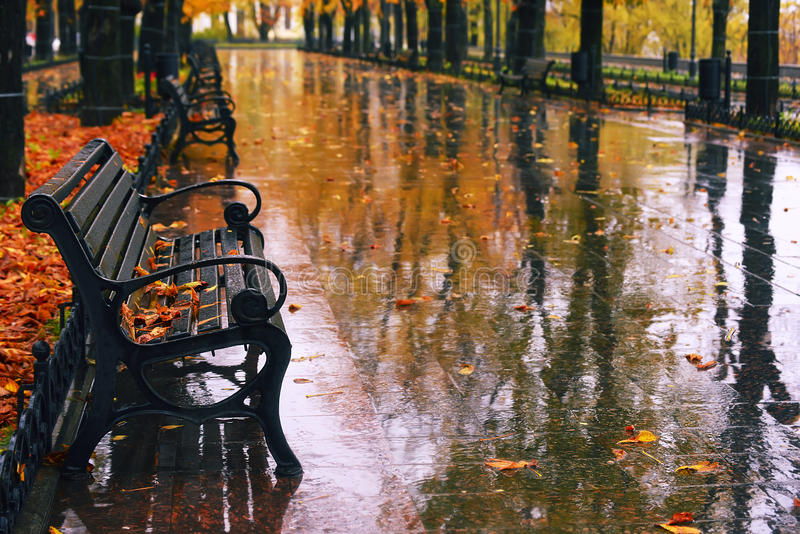Autumn boulevard in the rain. Wonderful autumnal view of the city boulevard, avenue. Alley with benches, the rain, the golden leaves of autumn trees are royalty free stock image