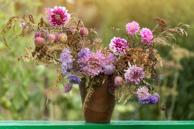 Autumn bouquet aster flowers and plums royalty free stock images