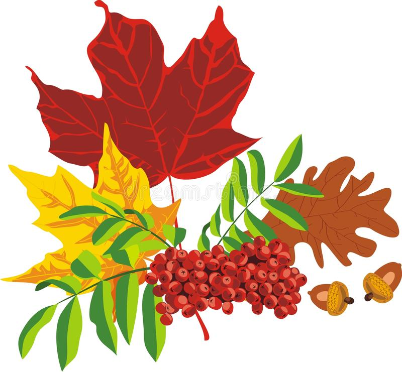Autumn bouquet from leaves of trees stock photo