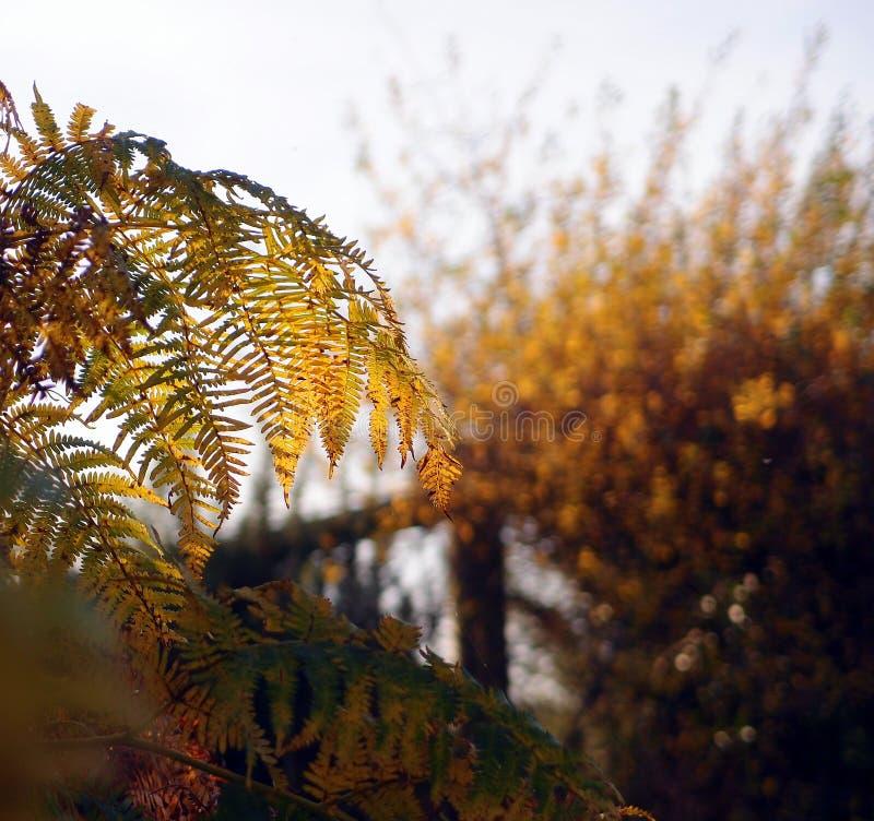 Autumn Bracken stockbild