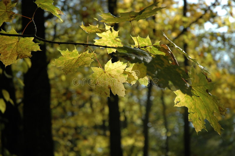 Download Autumn Branch Stock Photography - Image: 319332