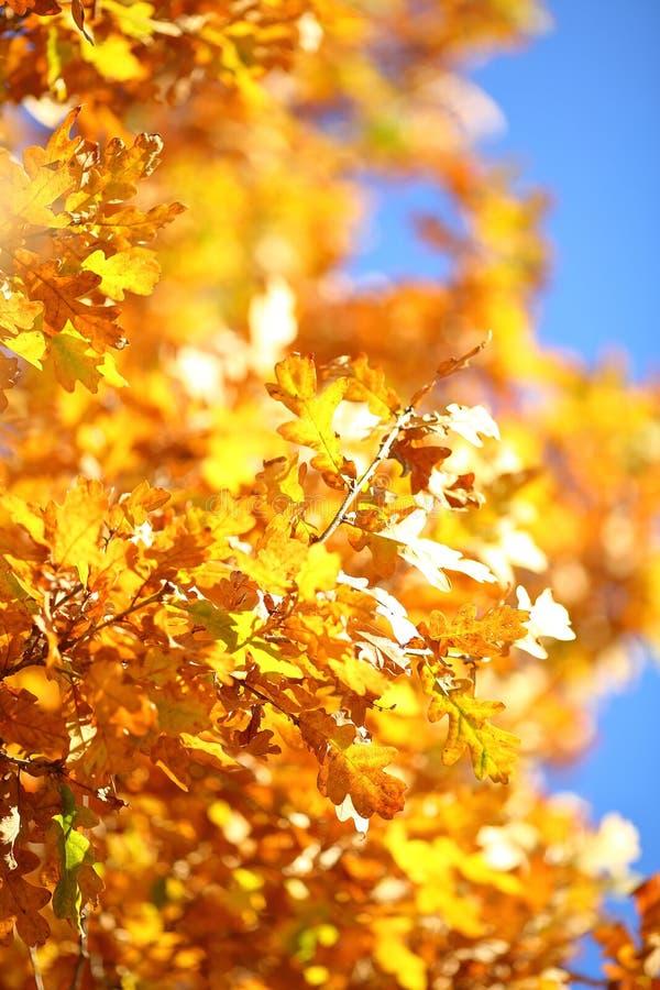 Autumn Branch images libres de droits