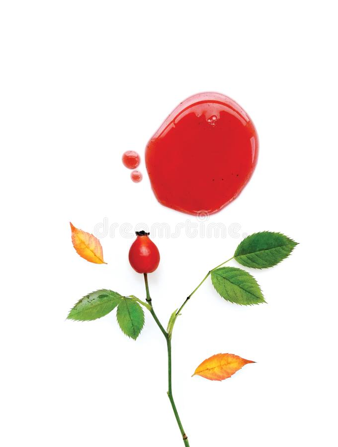 Autumn Branch with of Wild Rose, Canker-rose or Dog-rose, Red Berry, Fall Leaves and a Drop of Red Jam. Isolated on a White Background. Floral Composition, Top stock illustration
