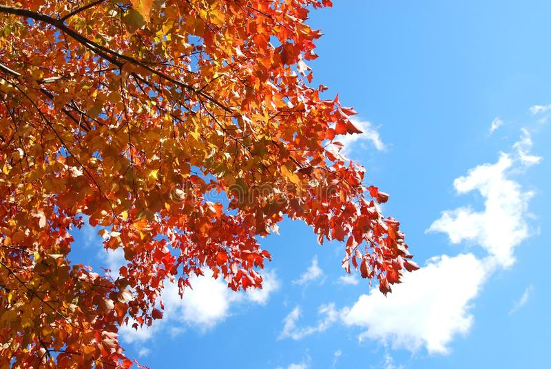 Download Autumn Branches Stock Photography - Image: 28649482