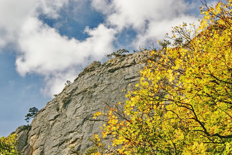 Autumn branches with yellow leaves at background cliff and sky royalty free stock photos