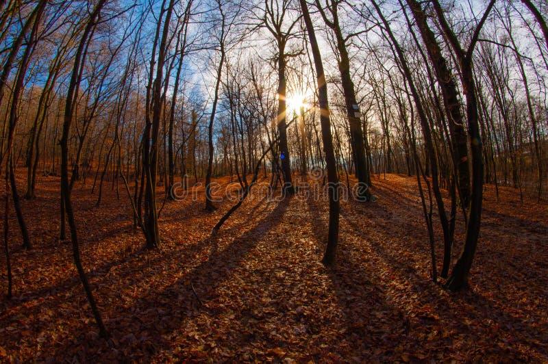 Autumn Breathe em A pouca madeira fotografia de stock