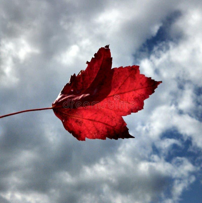 Autumn Breeze 2 royaltyfria foton
