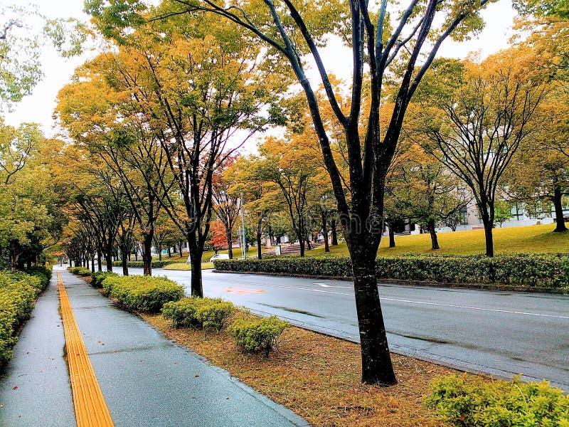 Autumn Breeze dans le campus image libre de droits