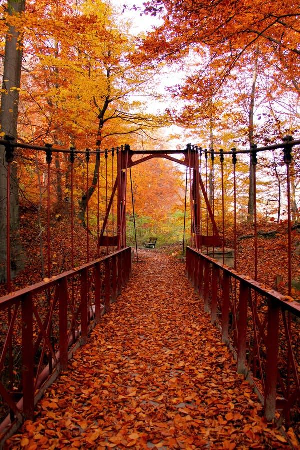 Autumn Bridge images stock