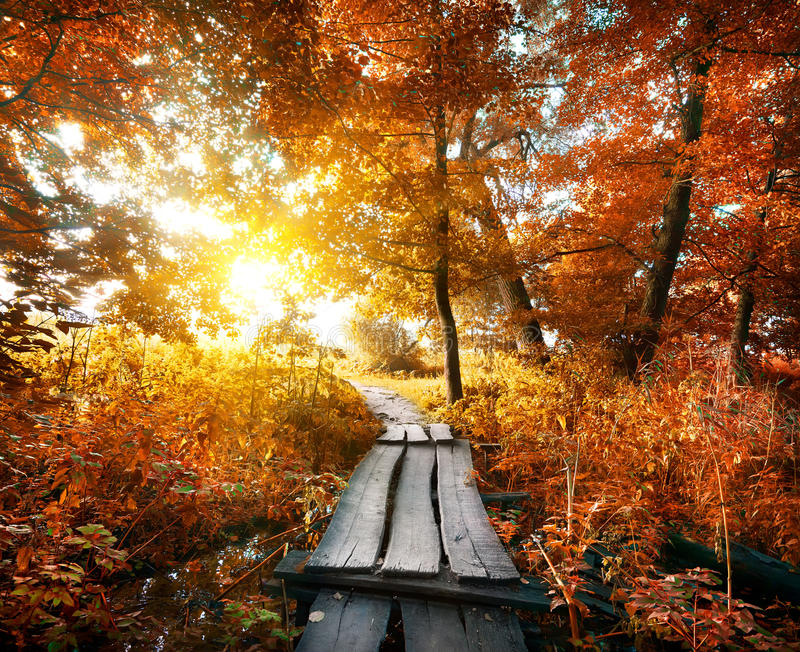Autumn and bridge royalty free stock image