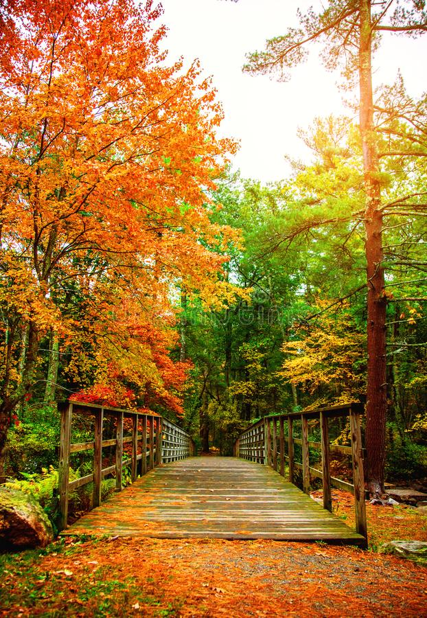 Free Autumn Bridge In The Woods Royalty Free Stock Images - 163432279