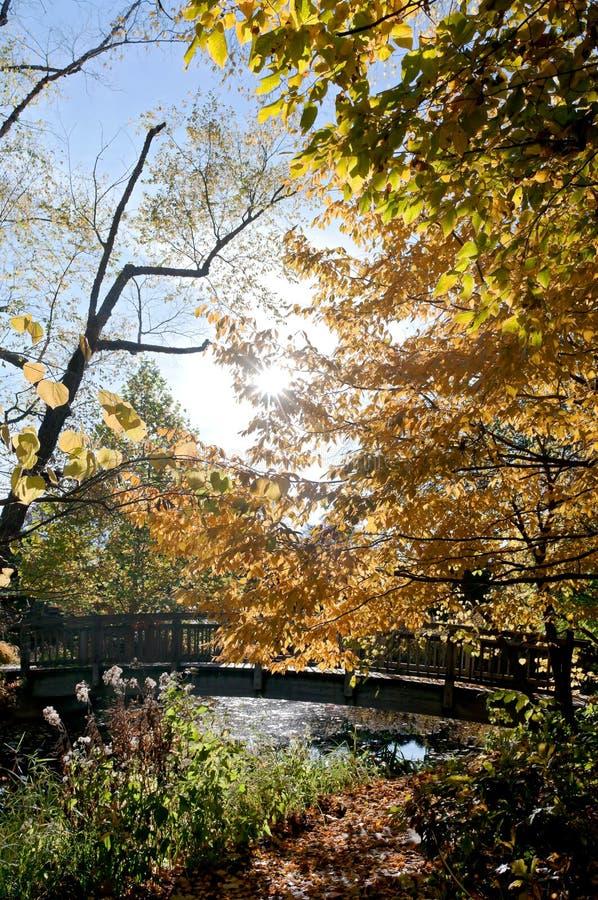 Autumn Bridge y arroyo en los jardines botánicos imagen de archivo libre de regalías