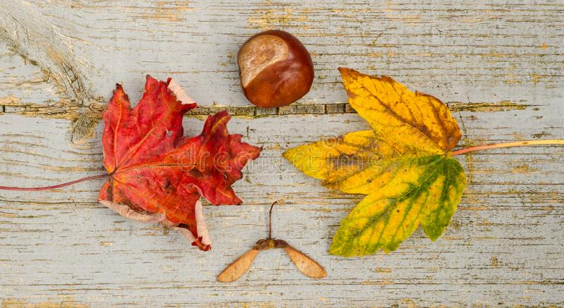 Autumn, Bright, Colors royalty free stock photo