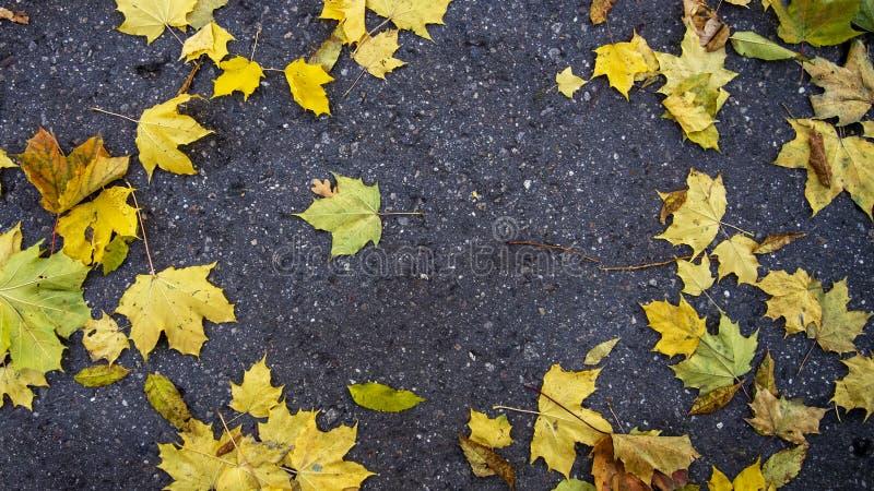 Autumn bright colourful green, yellow, orange fallen maple leaves on grey asphalt royalty free stock photos