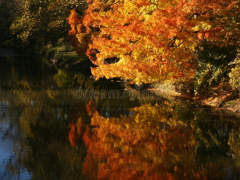 Autumn brilliance royalty free stock images